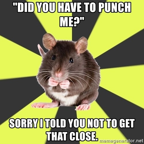"""Survivor Rat - """"Did you have to punch me?""""  Sorry I told you not to get that close."""