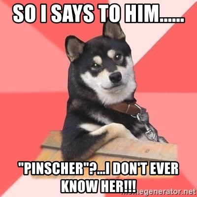 "Cool Dog - so i says to him...... ""pinscher""?...i don't ever know her!!!"