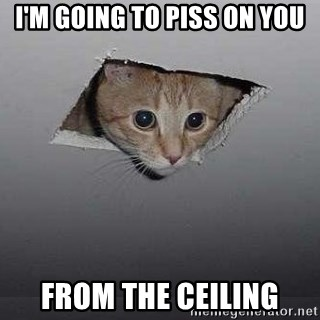 Ceiling cat - i'm going to piss on you from the ceiling