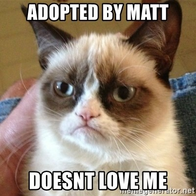not funny cat - adopted by matt doesnt love me