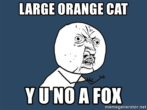 Y U No - large orange cat y u no a fox
