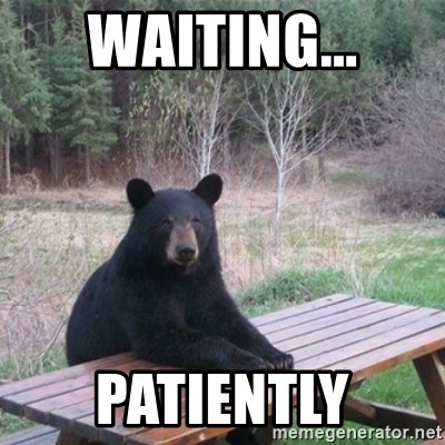 Patient Bear - Waiting... Patiently