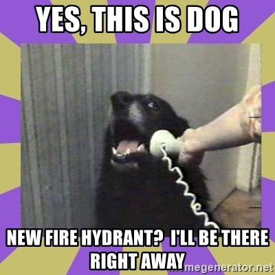 Yes, this is dog! - yes, this is dog new fire hydrant?  i'll be there right away