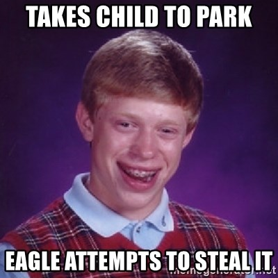 Bad Luck Brian - Takes child to park eagle attempts to steal it
