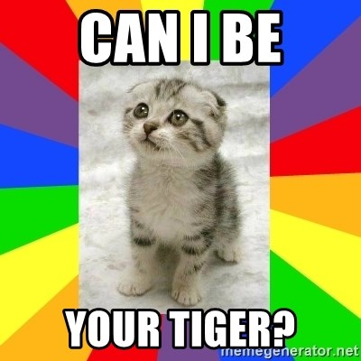 Cute Kitten - can i be your tiger?