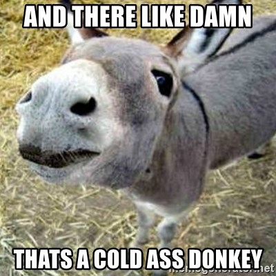 Assumptions Donkey - AND THERE LIKE DAMN  THATS A COLD ASS DONKEY