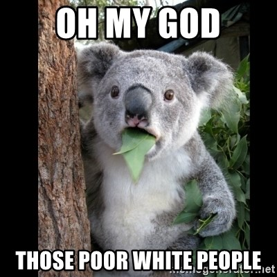 Koala can't believe it - Oh my god Those poor white people