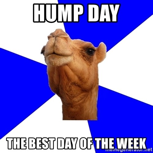 Classics Camel - HUMP Day The best day of the week