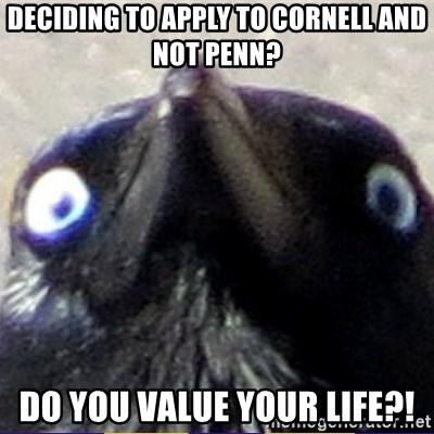 insanity crow - Deciding to apply to cornell and not penn? do you value your life?!