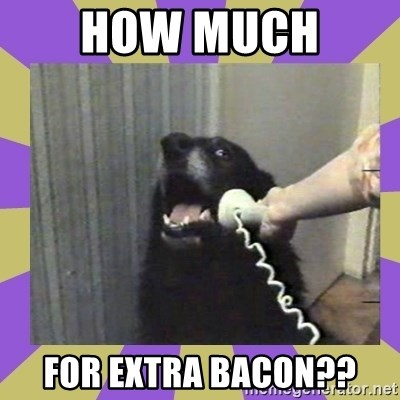 Yes, this is dog! - HOW MUCH  FOR EXTRA BACON??