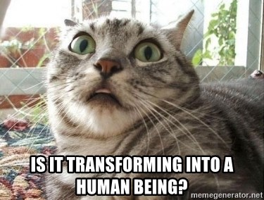 scared cat - is it transforming into a human being?