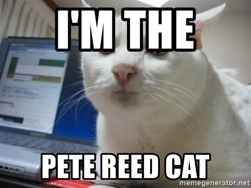 Serious Cat - I'M THE  PETE REED CAT