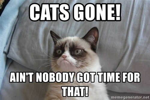 Grumpy cat good - CATS GONE! AIN'T NOBODY GOT TIME FOR THAT!