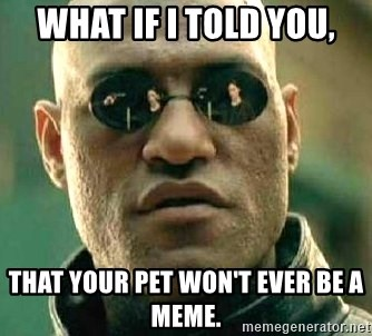 What if I told you / Matrix Morpheus - What if i told you, That your pet won't ever be a meme.