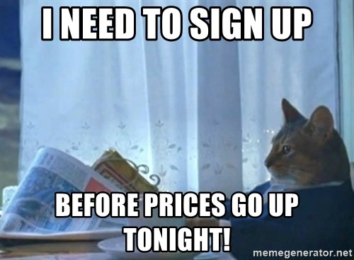newspaper cat realization - i need to sign up before prices go up tonight!