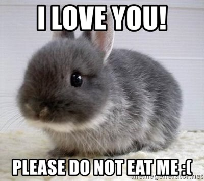 ADHD Bunny - i love you! PLEASE DO NOT EAT ME :(