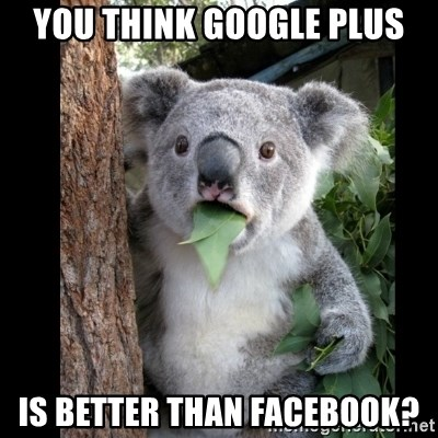 Koala can't believe it - you think google plus is better than facebook?