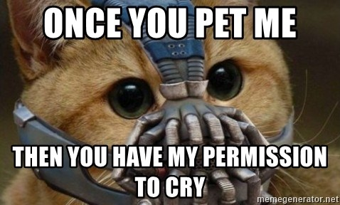 bane cat - Once you pet me  Then you have my permission to cry