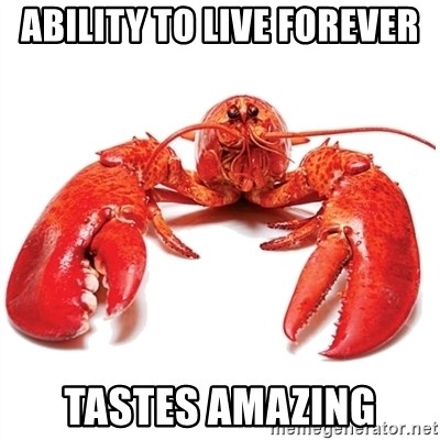 Unable to Relax and Have Fun Lobster - ABILITY TO LIVE FOREVER TASTES AMAZING