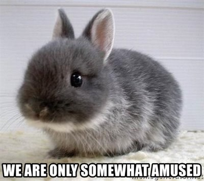 ADHD Bunny -  We are only somewhat amused