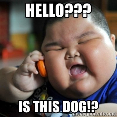 fat chinese kid - hello??? is this dog!?
