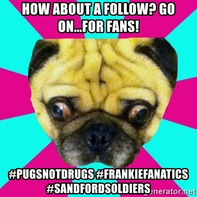Perplexed Pug - HOW ABOUT A FOLLOW? GO ON...FOR FANS! #PUGSNOTDRUGS #FRANKIEFANATICS #SANDFORDSOLDIERS