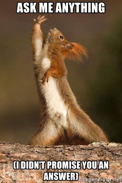 dramatic squirrel - ASK ME ANYTHING (I didn't promise you an answer)