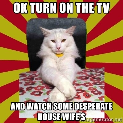 Dictator Cat - OK TURN ON THE TV AND WATCH SOME DESPERATE HOUSE WIFE'S