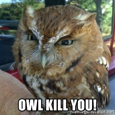 Overly Angry Owl -  Owl kill you!