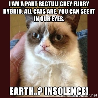 Tard the Grumpy Cat - I am a part rectuli grey furry hybrid. all cats are, you can see it in our eyes. earth..? insolence!