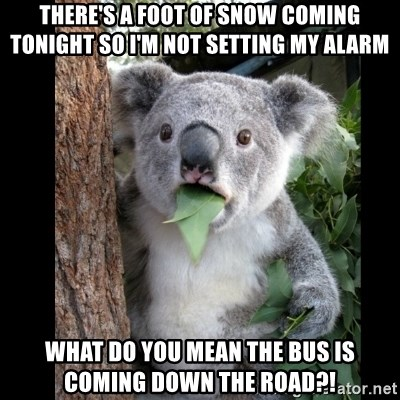 Koala can't believe it - There's a foot of snow coming tonight so i'm not setting my alarm what do you mean the bus is coming down the road?!