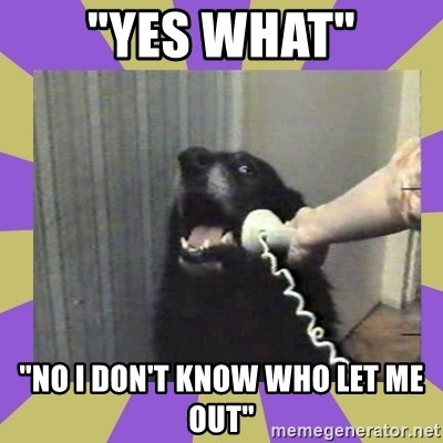 "Yes, this is dog! - ""YES WHAT"" ""NO I DON'T KNOW WHO LET ME OUT"""
