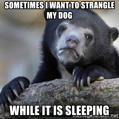 Confession Bear - Sometimes i want to strangle my dog while it is sleeping