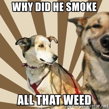 Stoner dogs concerned friend - WHY DID HE SMOKE  ALL THAT WEED