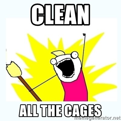 All the things - clean all the cages
