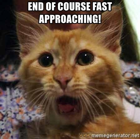 Crazy cat - end of course fast approaching!