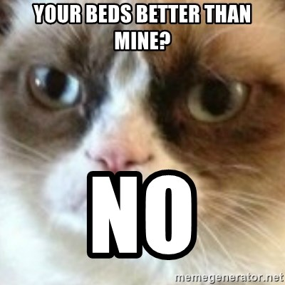 angry cat asshole - Your beds better than mine? NO