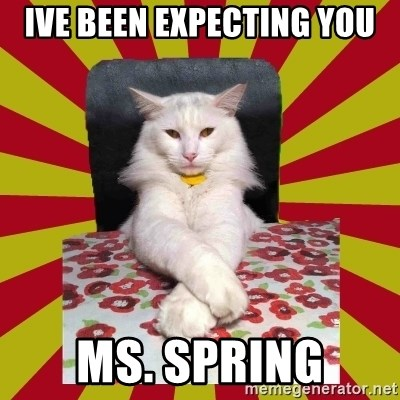 Dictator Cat - ive been expecting you MS. SPRING