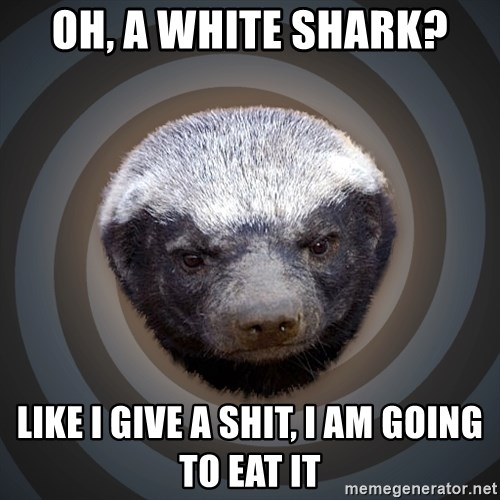 Fearless Honeybadger - OH, A WHITE SHARK? LIKE I GIVE A SHIT, I AM GOING TO EAT IT