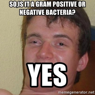 really high guy - so,is it a gram positive or negative bacteria? yes