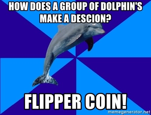 Drama Dolphin - How does a group of dolphin's make a descion? Flipper coin!