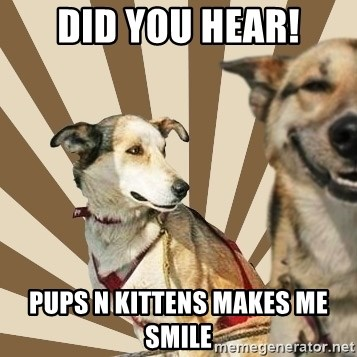 Stoner dogs concerned friend - DID YOU HEAR! PUPS N KITTENS MAKES ME SMILE
