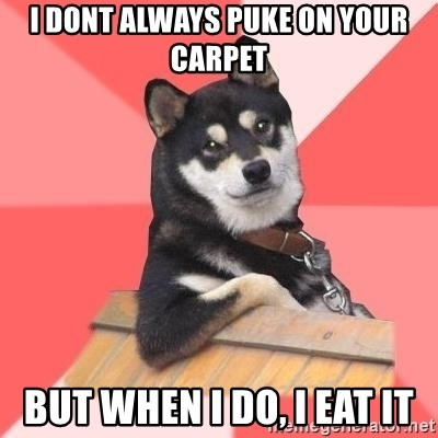 Cool Dog - i dont always puke on your carpet but when i do, i eat it