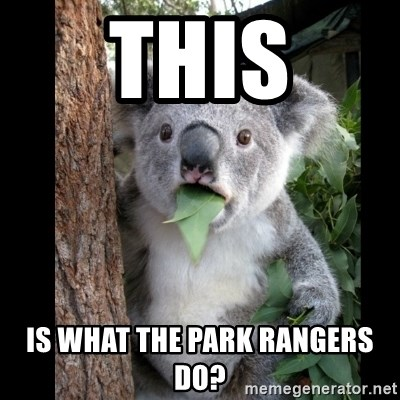 Koala can't believe it - This is what the park rangers do?
