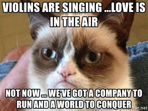 Angry Cat Meme - Violins are singing ...love is in the air  NOT now ... We've got a company to run and a world to conquer