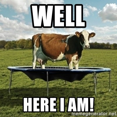 Unimpressionable Cow - well here I am!