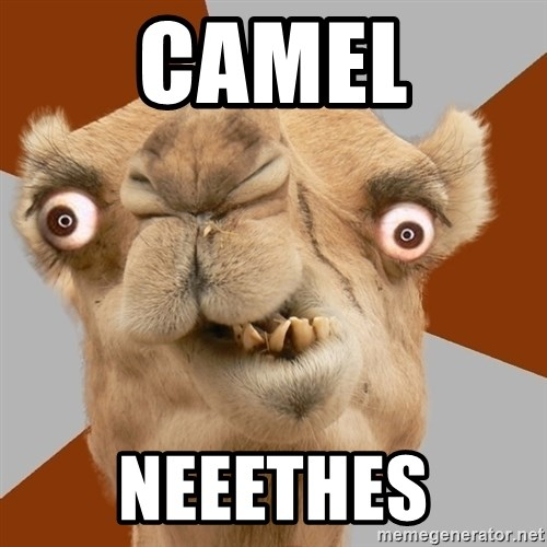 Crazy Camel lol - CAMEL NEEETHES