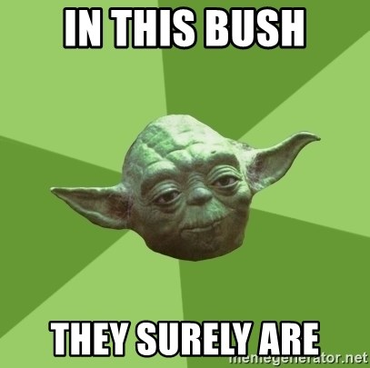 Advice Yoda Gives - In this bush they surely are