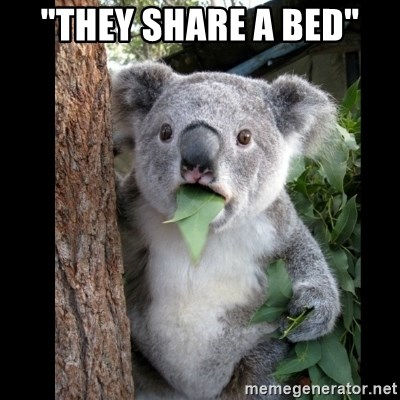 "Koala can't believe it - ""THEY SHARE A BED"""