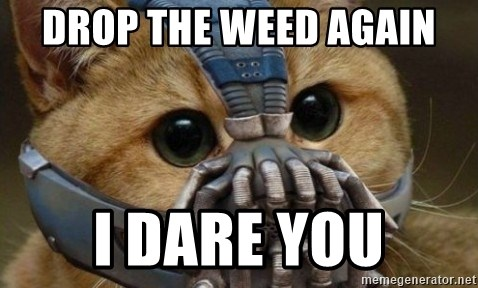 bane cat - drop the weed again i dare you